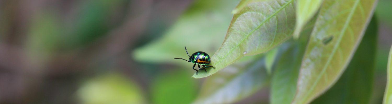 bug-1644255_1920